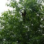 een zwerm in de boom