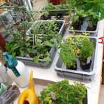investering in speciale plantjes