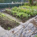 de planten vleven nu droger - dat vonden ze zeker ook leuk :)