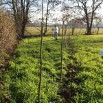de strook loopt uit in een wilgen- en elzenbosje, voor knothout en flechtmateriaal
