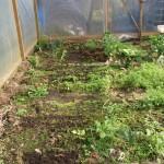 nog veel groen van vorig seizoen, tuinkers en vers gezaaid in de serre