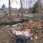 daar net was het nog opwarmen door hout te hakken, om het over enkele winters weer warm te hebben ;)