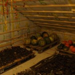 opberg van pompoen, yacon en chilli