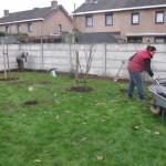 het gras op de boomspiegels weghalen, bomen planten en verzorgen